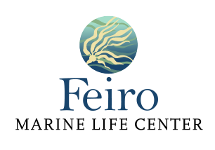 Feiro Marine Life Center
